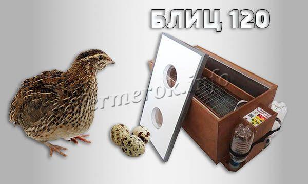 Фото инкубатора для перепелов «БЛИЦ 120»