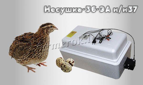 Фото инкубатора для перепелов «Несушка-36-ЭА н-н37»