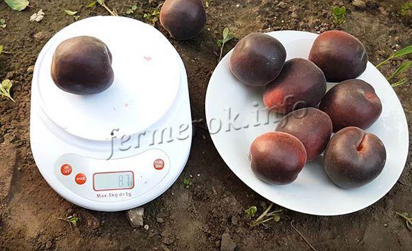 Плоды массой около 80 г и внешне очень похожи на персики