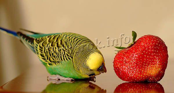 Плоды обладают нежным вкусом и насыщенным, мускатным ароматом