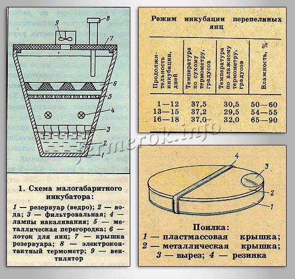 Схема малогабаритного инкубатора для перепелов из ведра