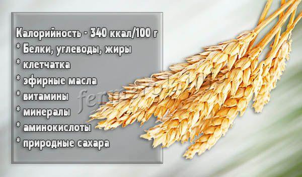 Твердая пшеница обладает своими уникальными биологическими признаками