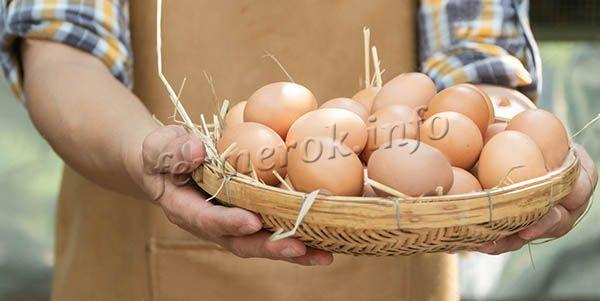 В год одна несушка дает примерно 350 яиц