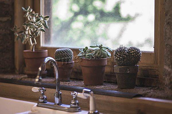 Вода из крана для полива кактусов не используется