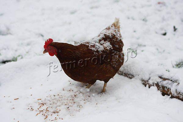 Зимой в корм полезно добавлять премиксы