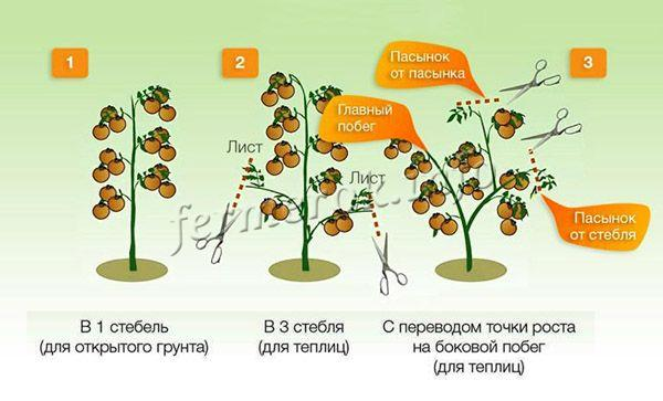 Формирование куста детерминантных томатом