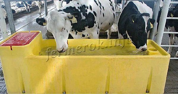 Групповые поилки – это уровневые поилки для скота