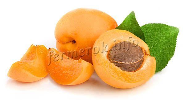 Мякоть плотная, оранжевого цвета