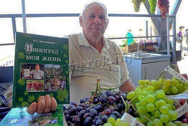 Виноград Джованни является результатом любительской селекции В. У. Капелюшного
