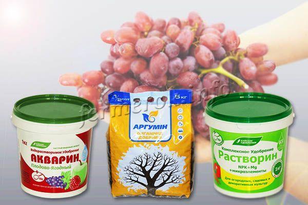Виноград Изюминка хорошо отзывается на «Аргумин», «Растворин», «Акварин»