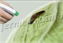 Чем обработать капусту