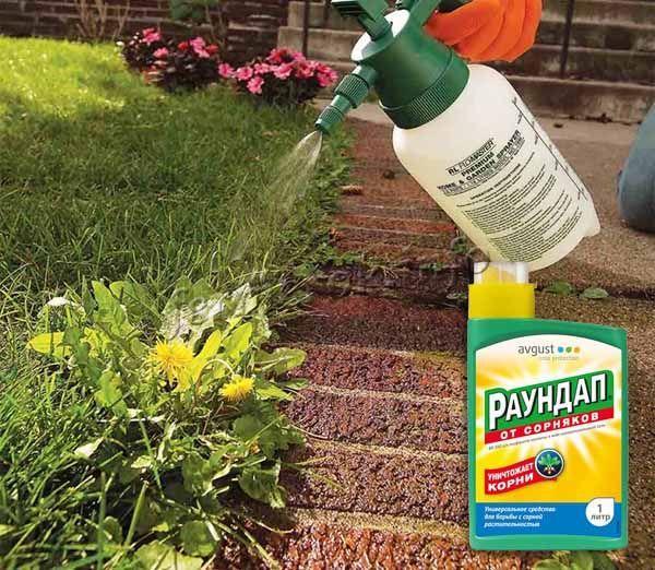 Для борьбы с одуванчиками стоит приобрести гербицид