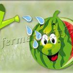 Как поливать арбузы