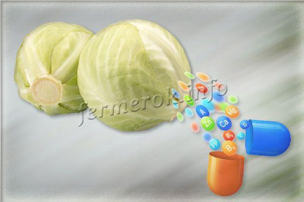 Витамины в белокочанной капусте