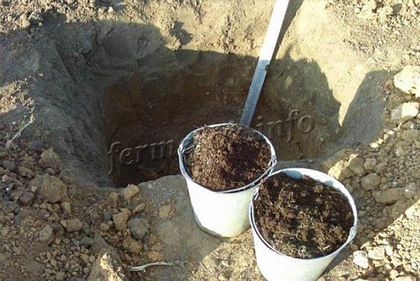 Яма для посадки винограда весной должен готовится с осени