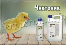 Чиктоник для птицы