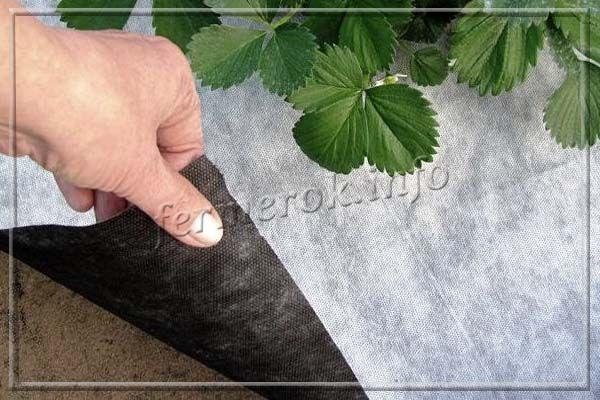 Агроволокно для защиты растений