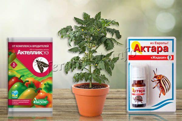 От тли и белокрылки можно использовать мыльный раствор или инсектициды «Актара» и «Актеллик»