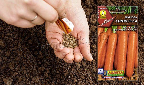 Посев моркови Карамелька нужно проводить с 20 апреля по 10 мая