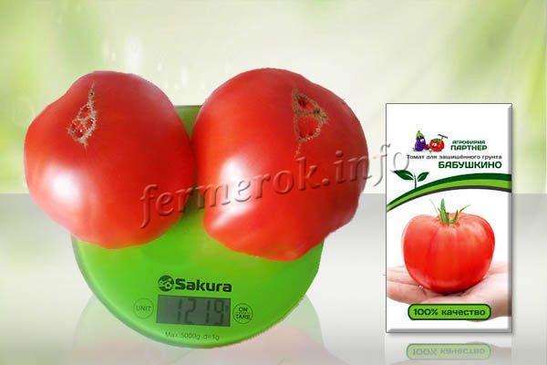 При правильном уходе, своевременных подкормках томат Бабушкино может вырасти до 1 кг!