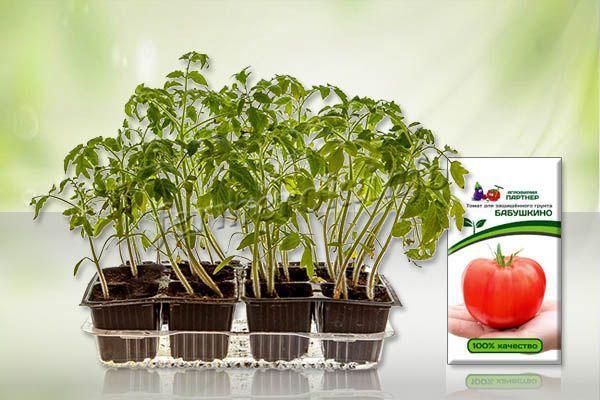 Проще всего выращивать помидоры Бабушкино через рассаду