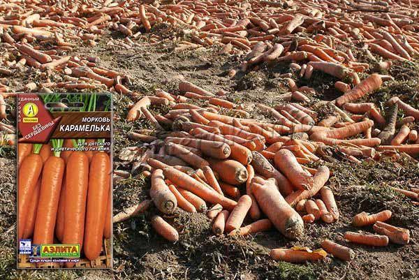 С квадратного метра посадок можно собрать 2,5-4 кг моркови