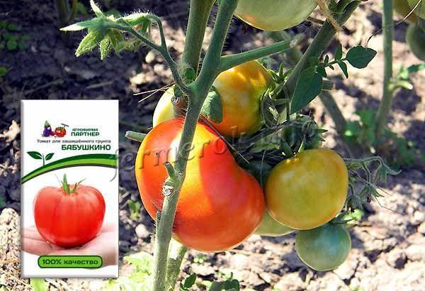 Семена томата Бабушкино необходимо приобретать у любителей сорта, селекционеров, так как в магазинах их практически никогда не продают