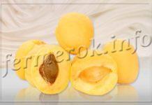 Сорт абрикоса Ананасный