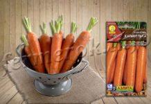 Сорт моркови Карамелька