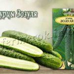 Сорт огурцов Зозуля