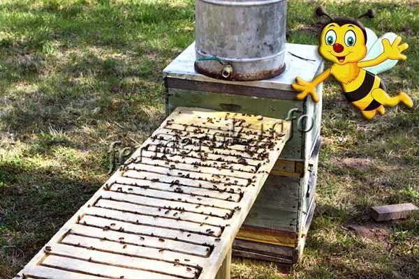 Фото поилки для пчел с подогревом своими руками