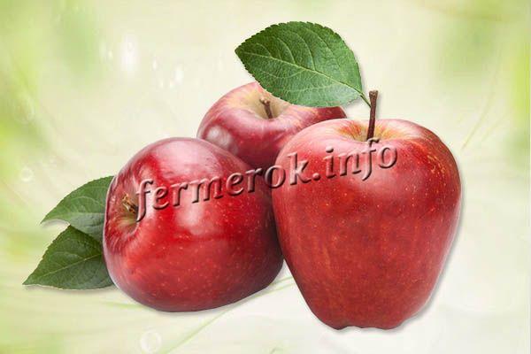 Фото яблок Гала Роял