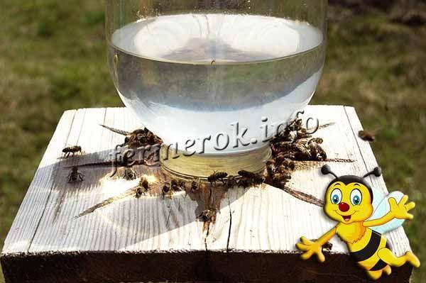 За одно лето пчелиная семья может выпить до 500 мл воды