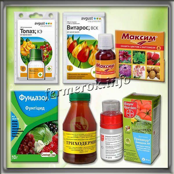 Фунгициды, рекомендованные для обработки перца от болезней