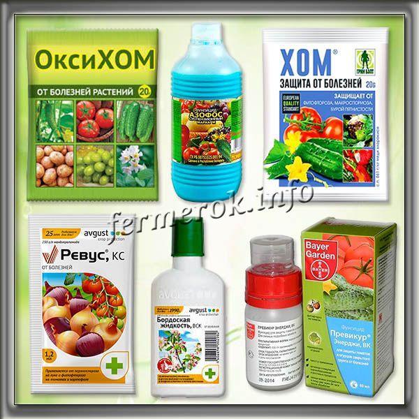 Химические препараты от фитофторы