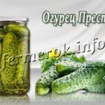 Сорт огурцов Престиж