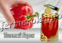 Сорт перца Толстый Барон