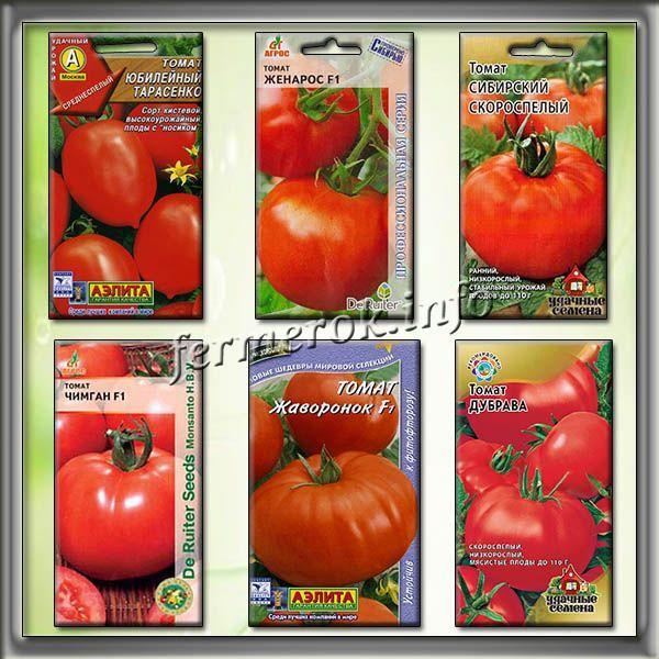 Сорта помидор, устойчивые к фитофторе