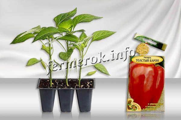 Выращивать перец Толстый Барон проще всего рассадным методом