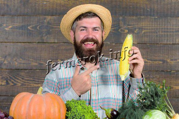 Польза и вред кукурузы для мужчин
