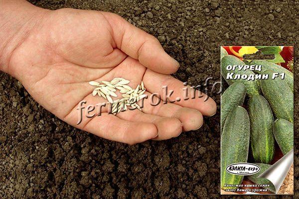 Прямой посев проводят в грунт примерно в конце мая или в начале июня