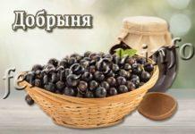 Сорт смородины Добрыня