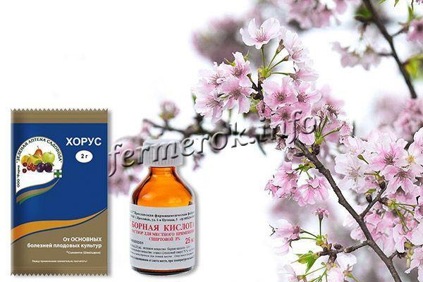 Во время цветения можно обработать черешню «Хорусом» и «Борной кислотой»