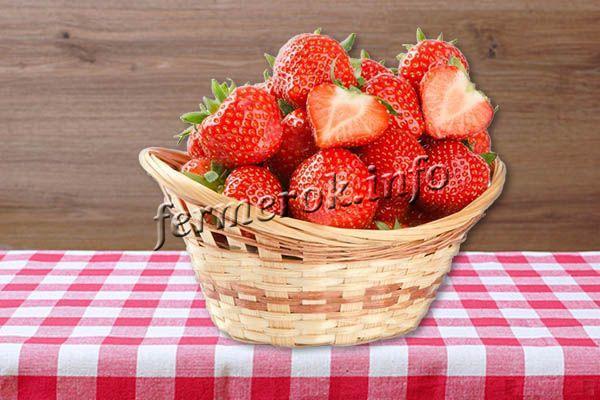 Масса ягоды в пределах 35-60 г, форма конусовидная