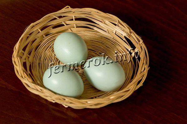 Скорлупа яиц оливкового, зеленого или голубоватого цвета, что обусловлено наличием в организме пигмент биливердин