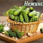 Сорт огурцов Нежинский