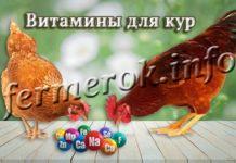 Витамины для кур