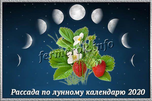 Когда лучше сажать землянику по лунному календарю