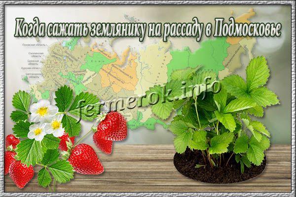 Когда сажать землянику на рассаду в Подмосковье