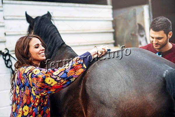 Лошадей нужно чистить каждый раз после вывода на улицу